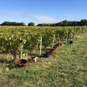 Vers une viticulture biologique