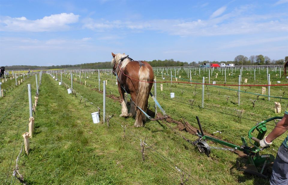 agriculture bio cheval