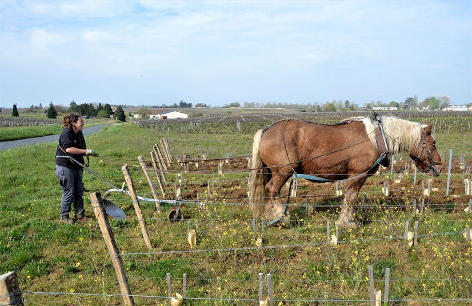 travail vignes à cheval