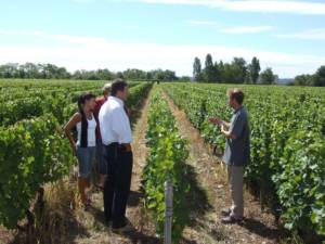 visite vignes chateau gaudrelle