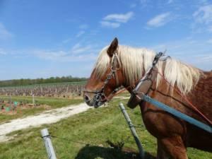 cheval vignes val de loire