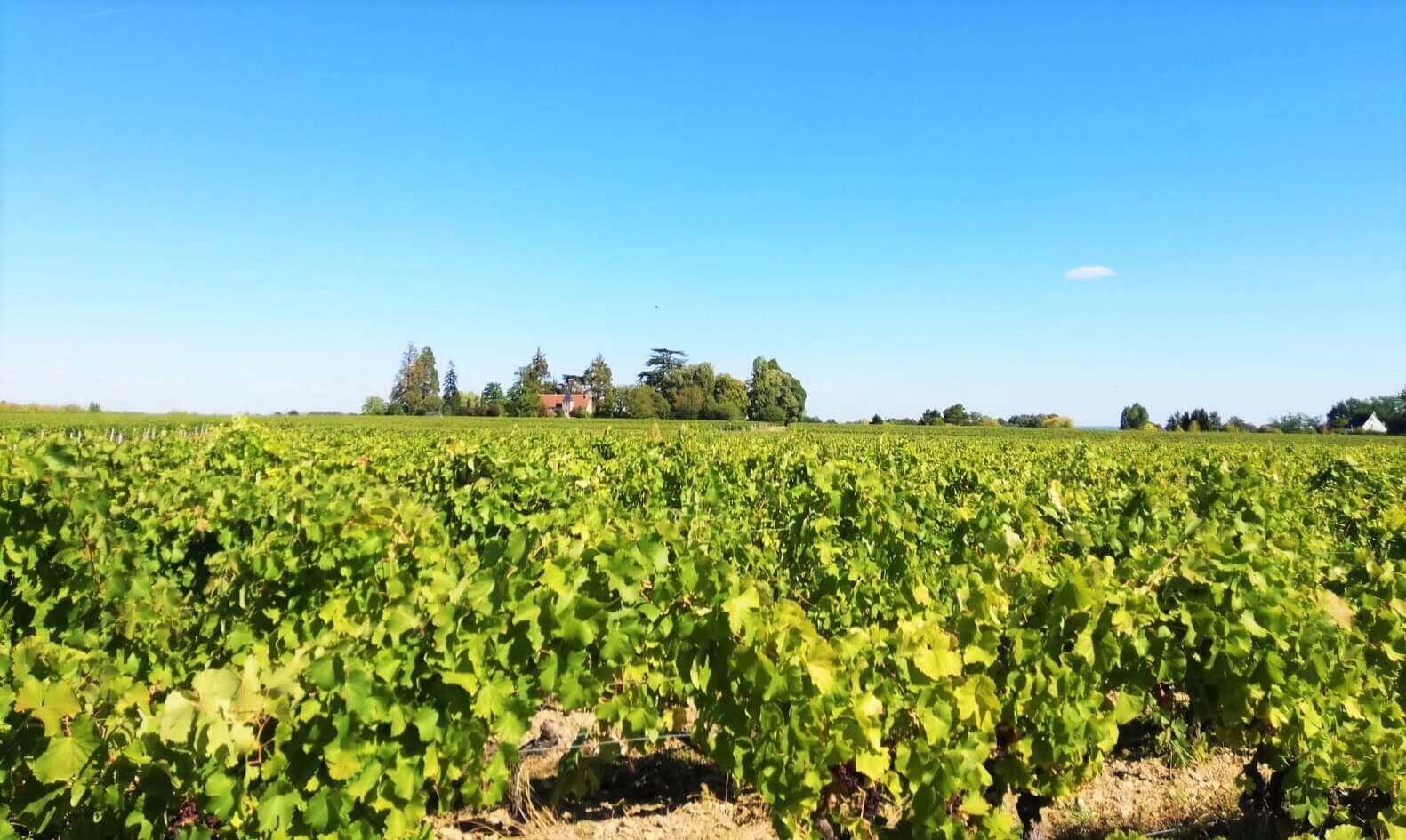 paysage vigne France